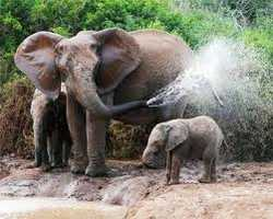The Addo Elephant National Park